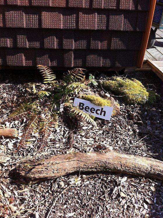Beech Pod