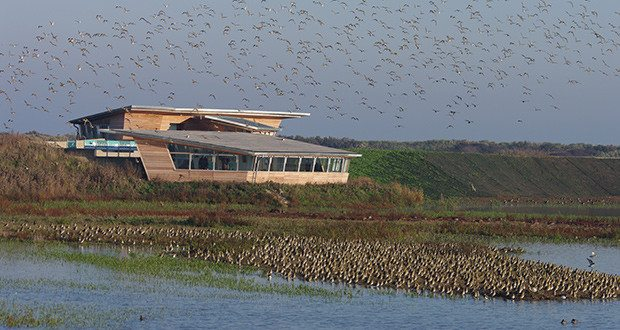 Golden Plover and Parrinder Hide at Titchwell Marsh.