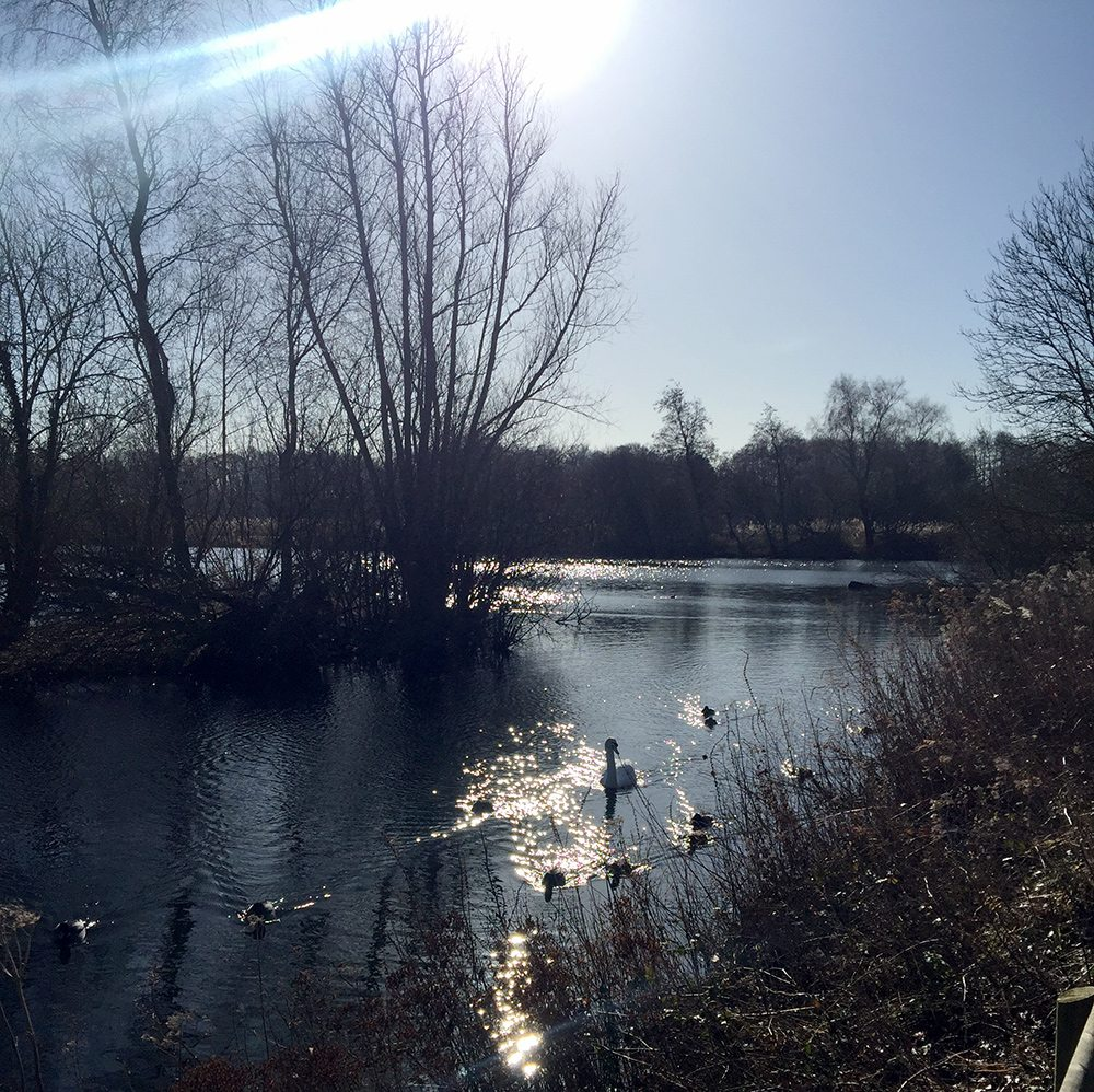 Glorious winter sunshine at Pensthorpe Natural Park.